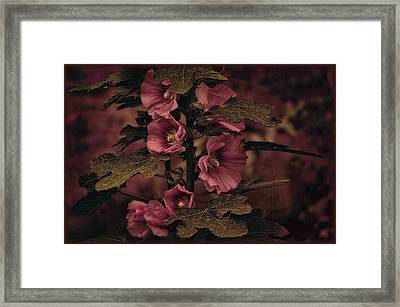 Framed Print featuring the photograph Last Hollyhock Blooms by Douglas MooreZart