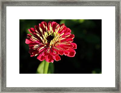 Last Hour Of Light Framed Print by Christopher Phelps