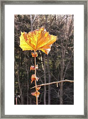Last Leaf Framed Print by JAMART Photography