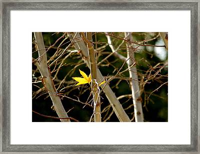 Framed Print featuring the photograph Last Leaf by Kume Bryant