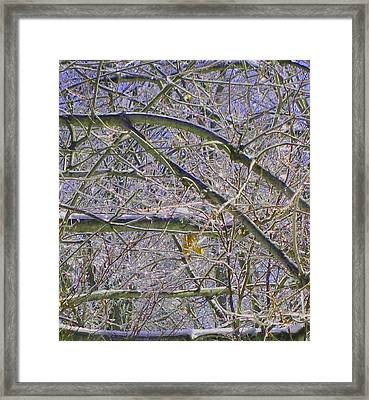 Last Leaf Of Winter Framed Print by Misty VanPool