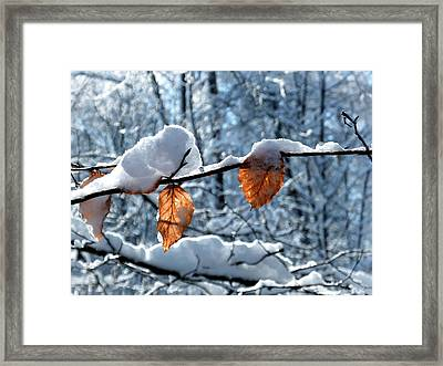 Last Leaves Framed Print