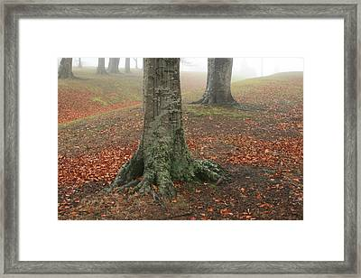 Last Leaves Of Autumn Framed Print by Terry Perham