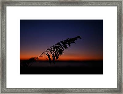 last light at Hilton Head Island Framed Print