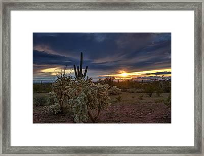 Last Light In The Sonoran Desert  Framed Print