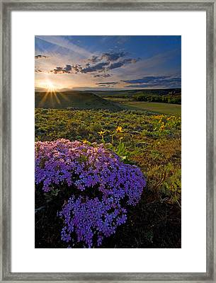 Last Light Of Spring Framed Print by Mike  Dawson