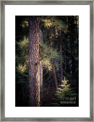Last Light Framed Print by The Forests Edge Photography - Diane Sandoval