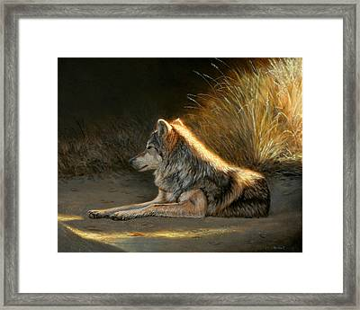 Last Light - Wolf Framed Print