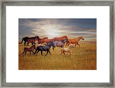 Last Light's Run Framed Print