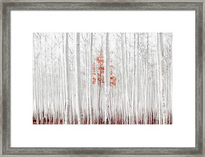 Last Of Its Kind Framed Print