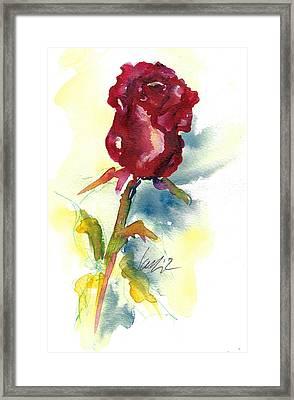 Last Rose Of Summer Framed Print