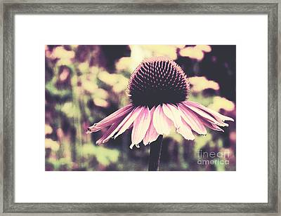 Last Summer Framed Print by Angela Doelling AD DESIGN Photo and PhotoArt