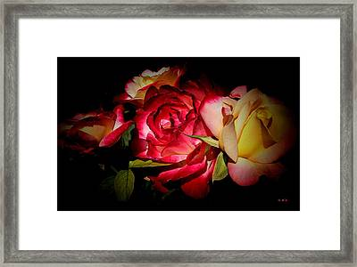 Last Summer Roses Framed Print