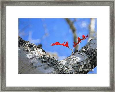 Last To Leaf Framed Print by Debbie Karnes