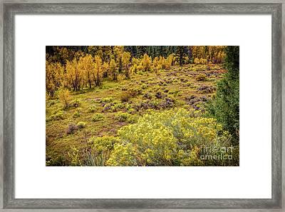 Last Warm Days Framed Print by Jon Burch Photography
