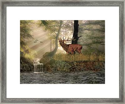 Late Afternoon Call Framed Print