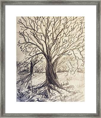 Late Afternoon Framed Print by Carol Apple