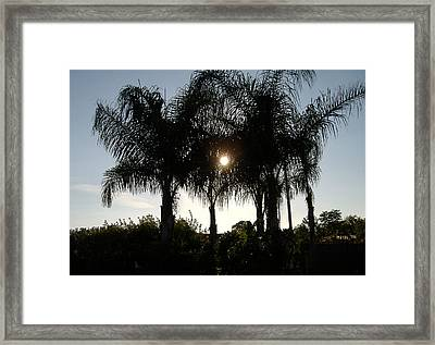 Late Afternoon Sun Framed Print by Diane Ferguson