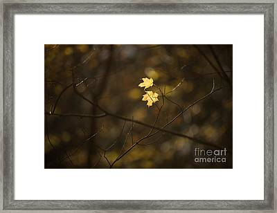 Late Autumn Light Framed Print by Diane Diederich