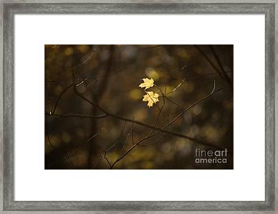 Late Autumn Light Framed Print by Diane Diederich