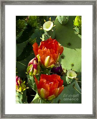 Late Bloomer Framed Print