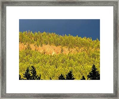 Late Day Sun Framed Print by Will Borden