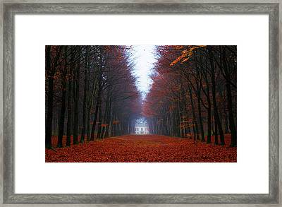 Late Fall Forest Framed Print