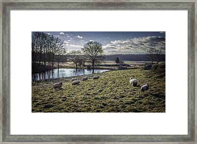 Late Fall Pastoral Framed Print