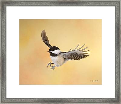 Late For Lunch Framed Print by Gerry Sibell