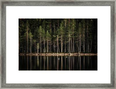 Late Loons Framed Print