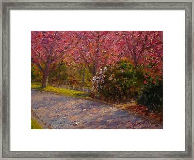 Late Spring Blossom Framed Print