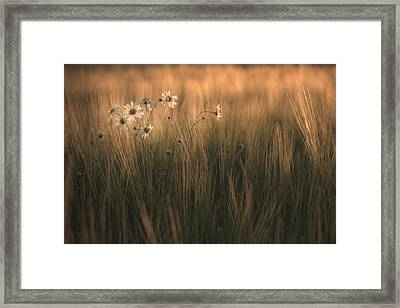 Late Summer Bloom Framed Print