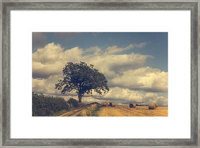 Late Summer Framed Print by Chris Fletcher