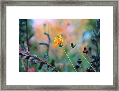 Late Summer Rain From The Forest Floor Framed Print by Bob Orsillo
