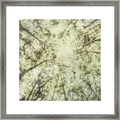 Late Summer Tree Tops Framed Print by Priska Wettstein