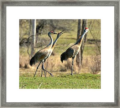 Late Winter Song Framed Print