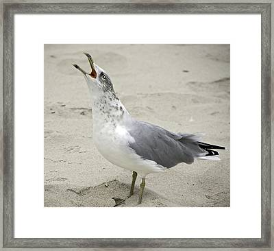 Laugh It Up Framed Print by Scott Evers