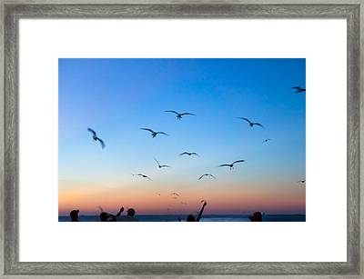 Laughing Gulls In The Evening Sky Framed Print