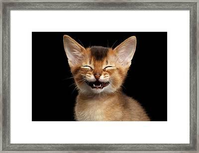 Laughing Kitten  Framed Print by Sergey Taran