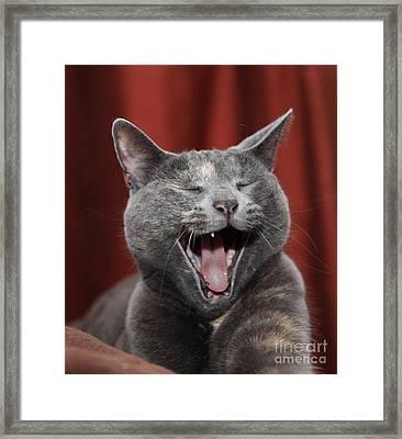 Laughing Kitty Framed Print