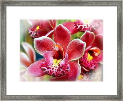 Laughing Orchids Framed Print by Sue Melvin