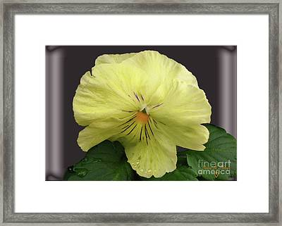 Framed Print featuring the photograph Laughing Pansy by Donna Brown
