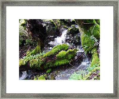 Laughing Waters Framed Print by JoAnn SkyWatcher