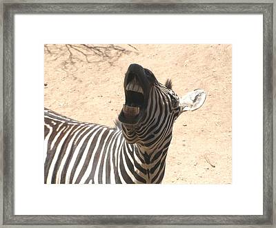 Laughing Zebra Framed Print by Jeanette Oberholtzer