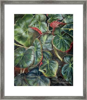Laura's Begonia Framed Print by Karen Boudreaux