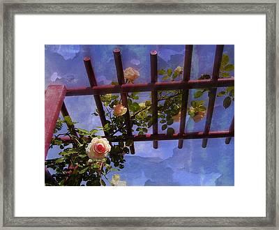 Laura's Rose Trellis 2 Framed Print by Jen White