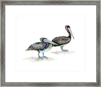 Laurel And Hardy, Brown Pelicans Framed Print by Amy Kirkpatrick