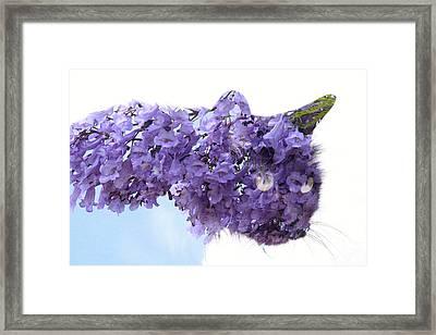 Laurel Kitty Framed Print