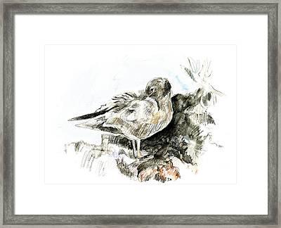 Lava Gull Framed Print