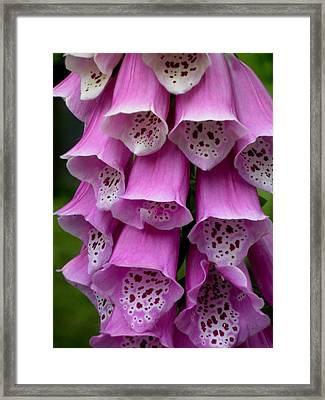 Lavendar Bells Framed Print by Jeanette Oberholtzer